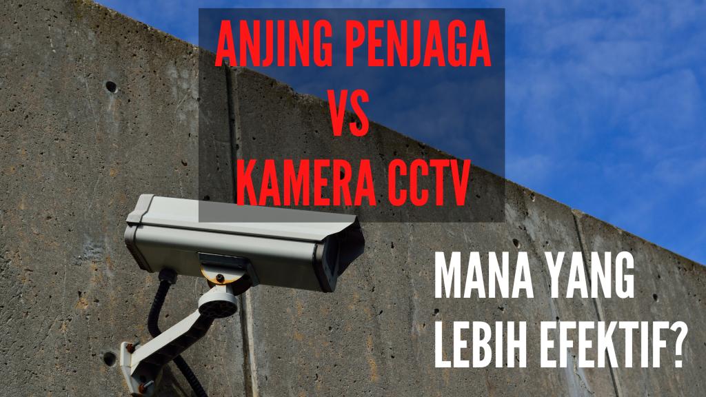 Anjing Penjaga VS Kamera CCTV, Mana yang Lebih Efektif?